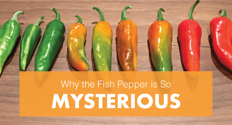 Why the Fish Pepper is So Mysterious