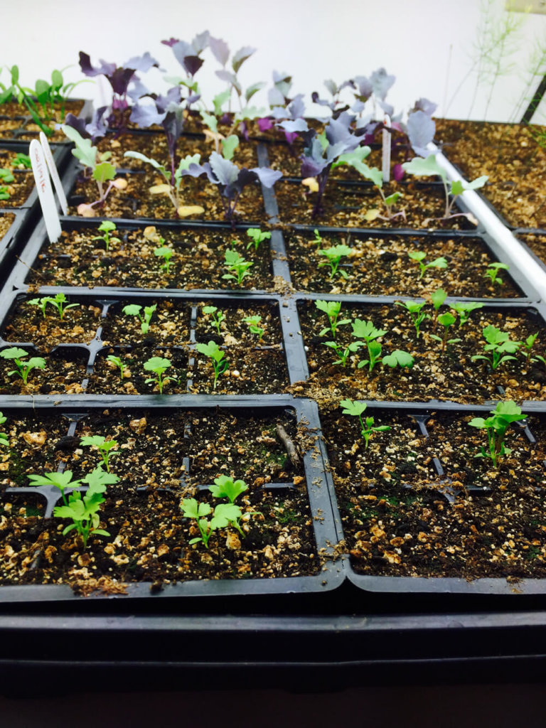 11 Steps to Seed Starting Indoors