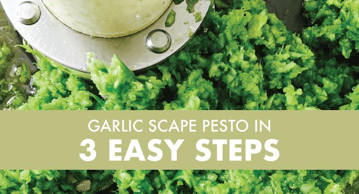 Garlic Scape Pesto in 3 Easy Steps