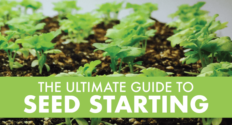 The Ultimate Guide to Seed Starting