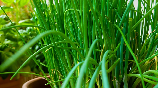 10 Must Have Herbs For Your Vegetable Garden