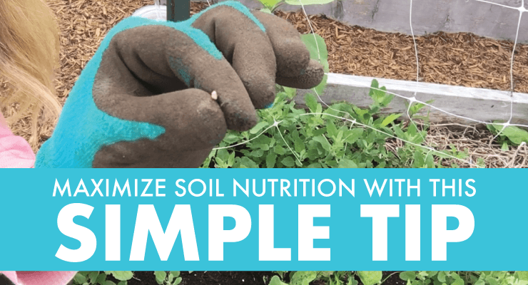 Maximize Soil Nutrition with This Simple Tip