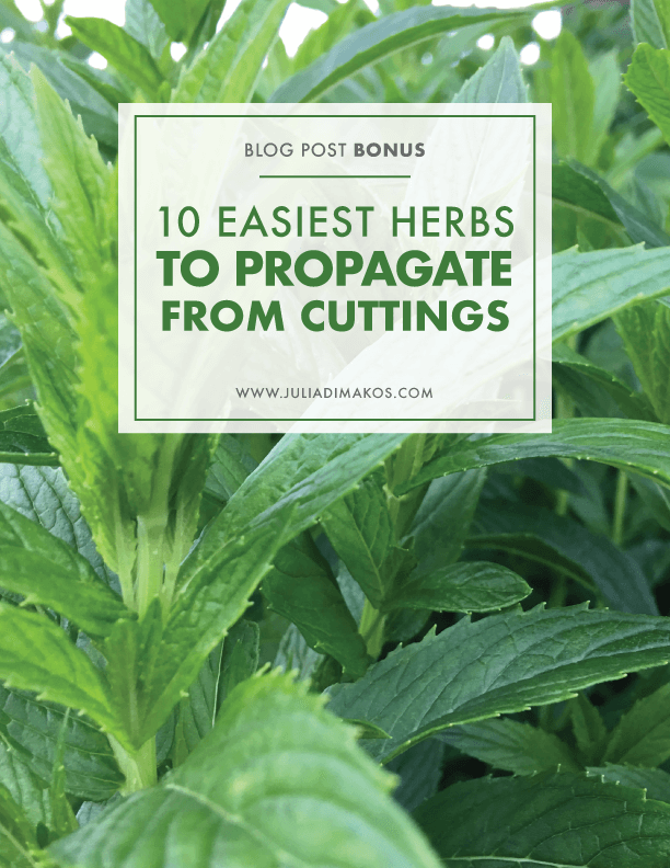 The 10 Easiest Herbs to Propagate from Cuttings