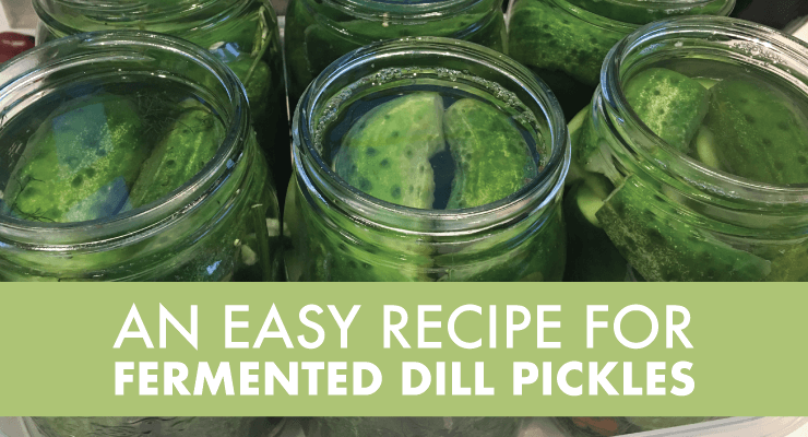An Easy Recipe for Fermented Dill Pickles