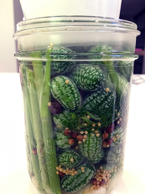 Recipe for Fermented Cucamelon Pickles