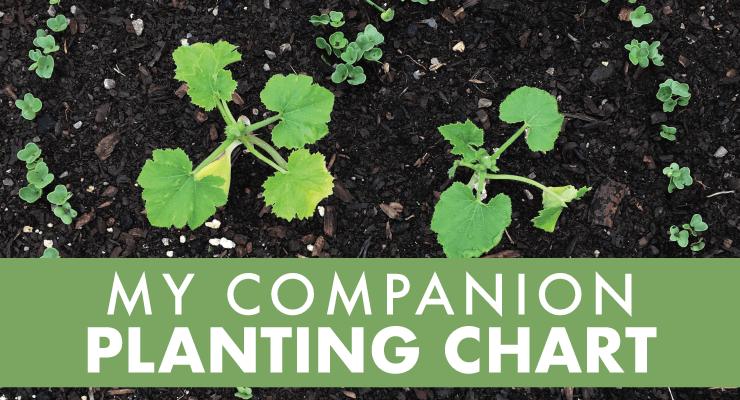 My Companion Planting Chart