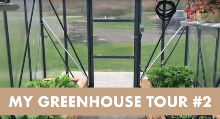 My Greenhouse Tour #2