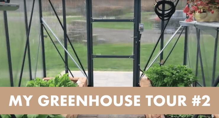 My Greenhouse Tour #2