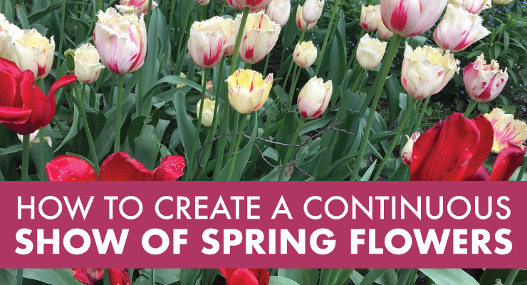 How to Create a Continuous Show of Spring Flowers