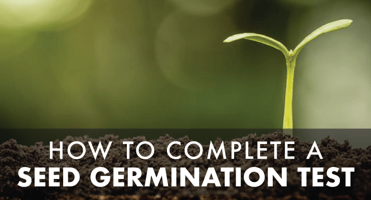 How to Complete a Seed Germination Test