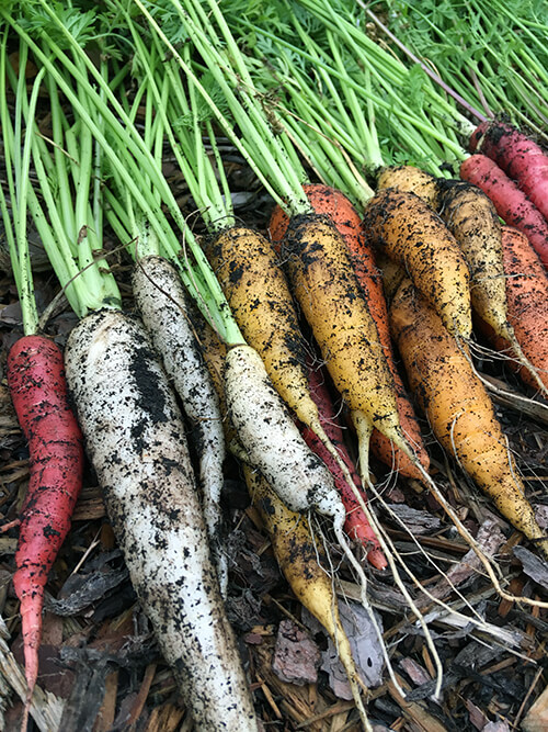 How to Have a Vegetable Garden and Travel