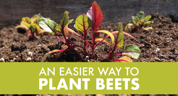 An Easier Way to Plant Beets