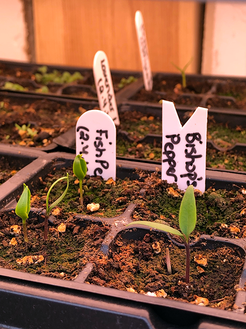 How to Care for Your Indoor Seedlings after Germination