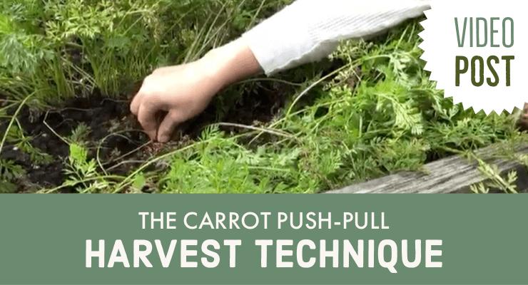 Video: The Carrot Push-Pull Harvest Technique
