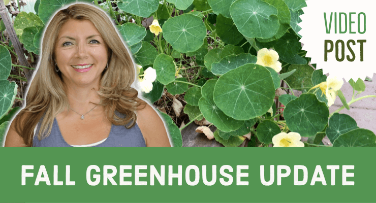 Video Post: Fall Greenhouse Update