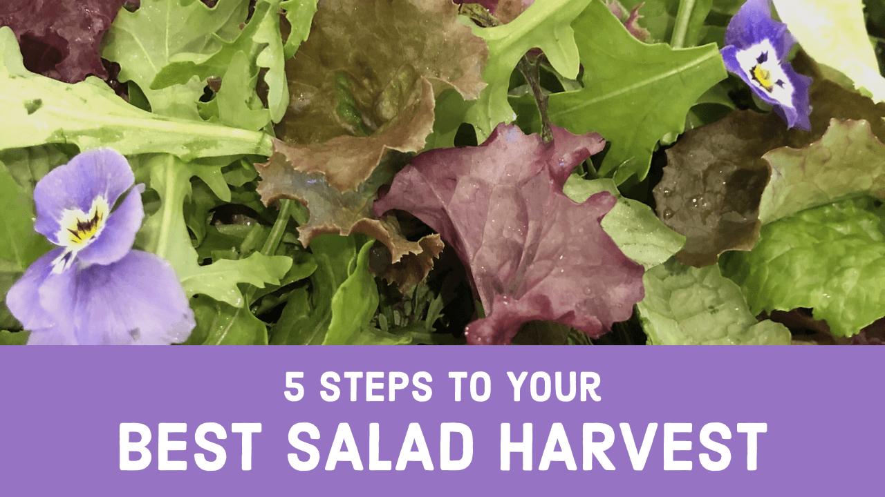5 Steps to Your Best Salad Harvest