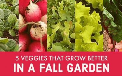 5 Veggies that Grow Better in a Fall Garden