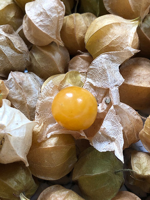 What is a Ground Cherry