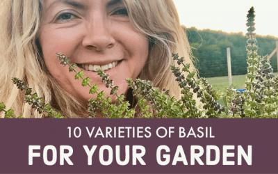 10 Varieties of Basil for your Garden