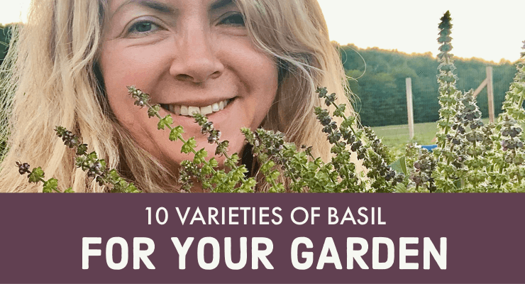 10 Varieties of Basil For Your Garden
